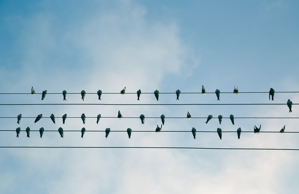 Birds sitting on electric wires.